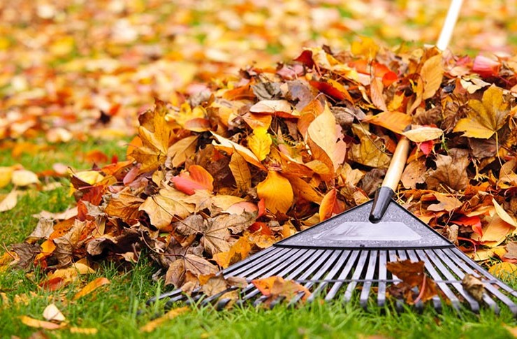 how-to-prepare-your-garden-for-autumn