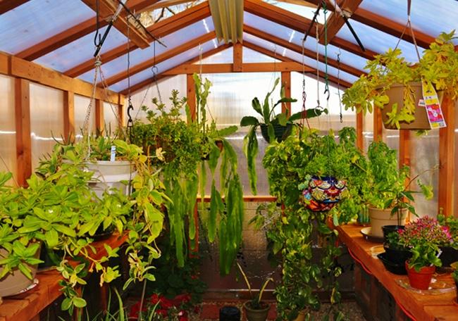 Gardening Greenhouse