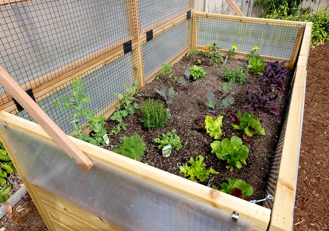 Greenhouse Kit with Raised Garden Bed