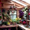 Cedar Shed Kit - inside with flowers