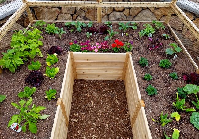 Gardening Bed | Raised Garden Bed with Deer Fence