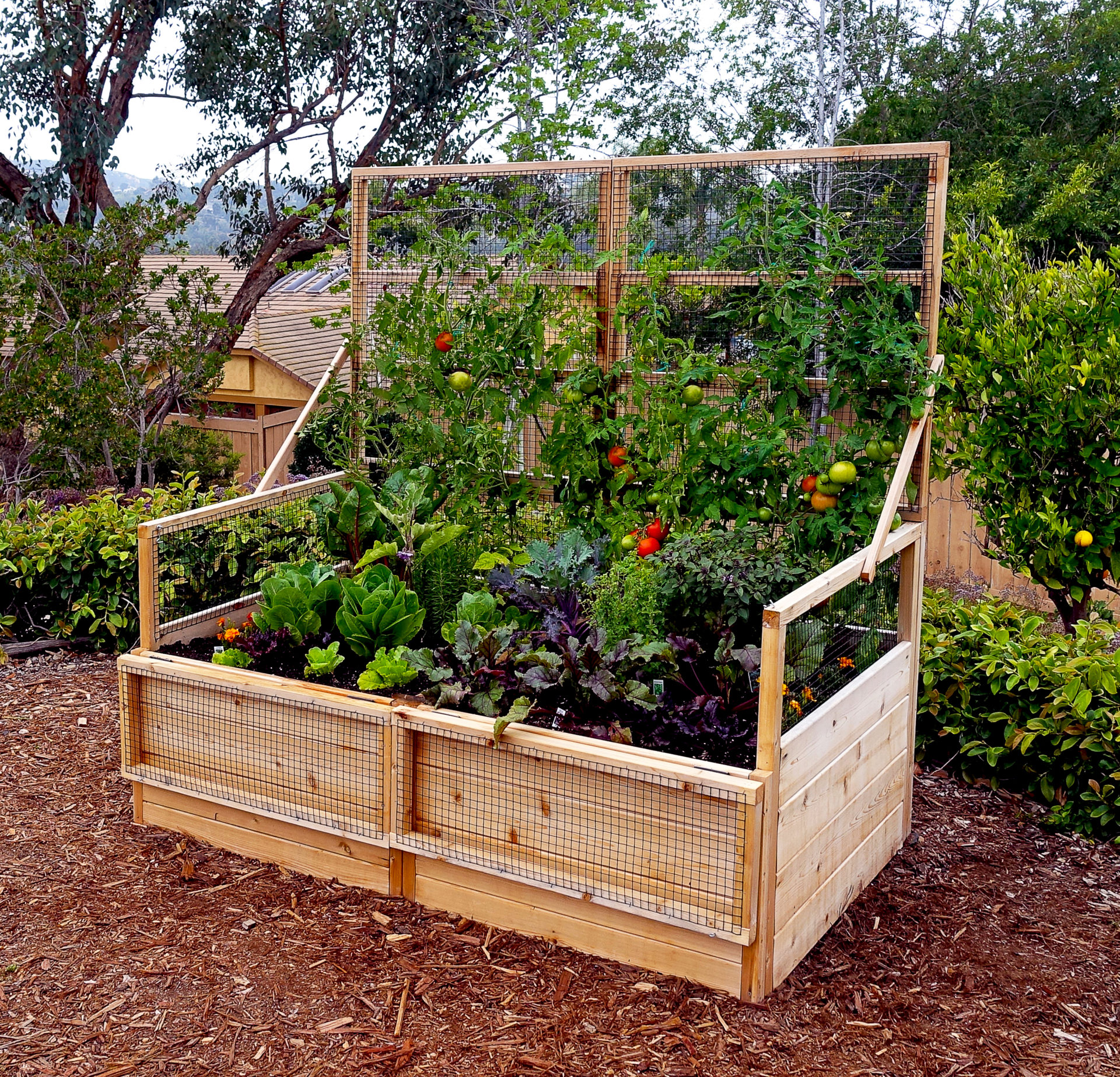 Backyard Garden Ideas What To Plant In Your Backyard Garden