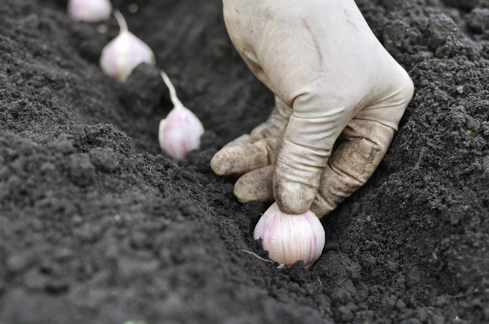 Best Vegetables to Grow